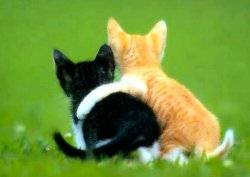 pictures_of_kittens_cats-friends.jpg