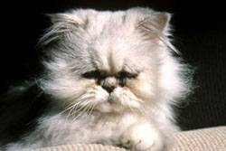 pictures_of_kittens_cats-grumpy.jpg