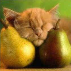 pictures_of_kittens_cats-pears_and_kitten.jpg